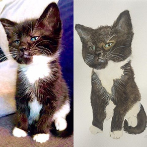 My first pet commission - What do you think?
