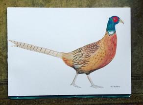 The Pheasant....