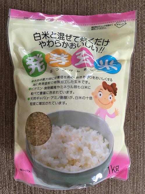 Shin Nakano - Hatsuga Genmai Germinated Brown Rice