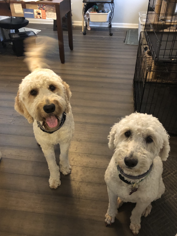 Lulu and Hank