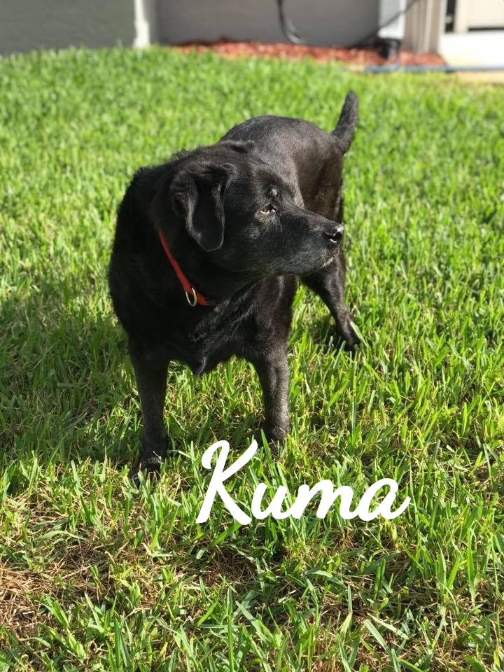 Kuma_edited
