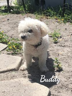 Buddy2_edited