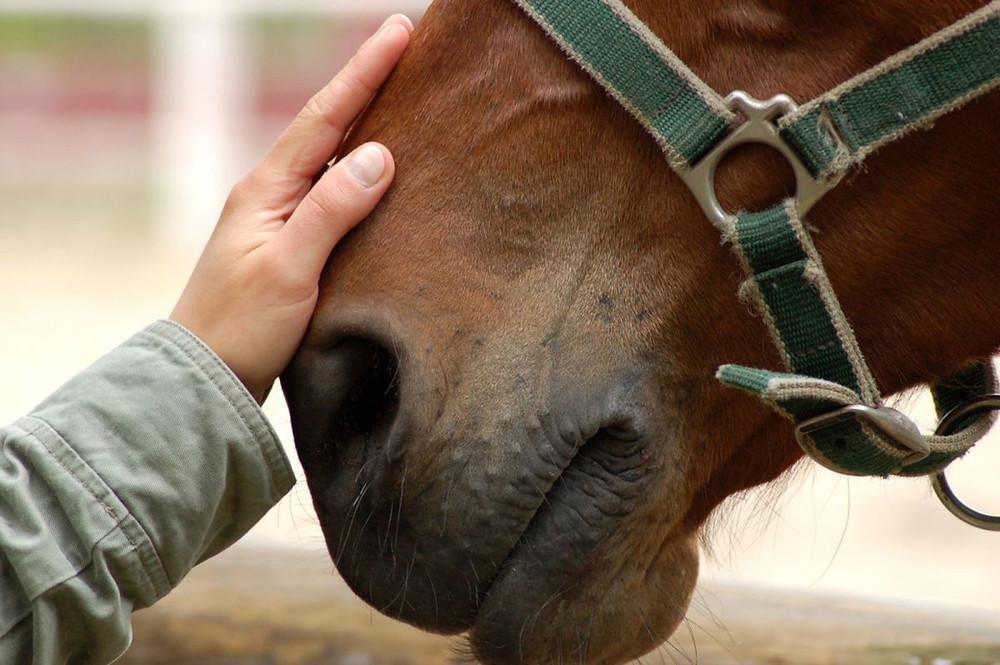horse, farm, horses,