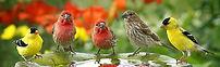 wild bird feed.jpg