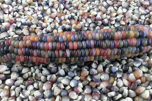 "Glass Gem Corn ""The Original)"