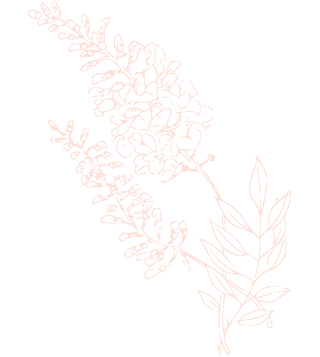 Wisteria1.png