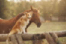 Red border collie dog and horse together