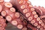 Octopus 4.jpg
