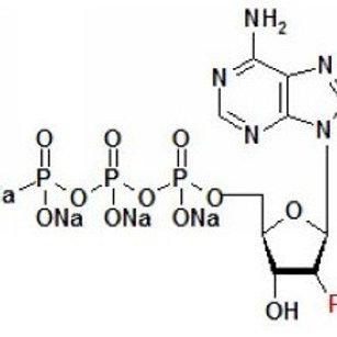 2'F-dNTP,2'-Fluorine-dNTP [bulk package: 4x1ml]