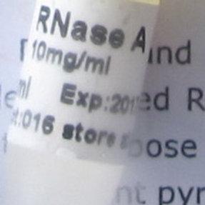 RNase A (Solution) - 1ml