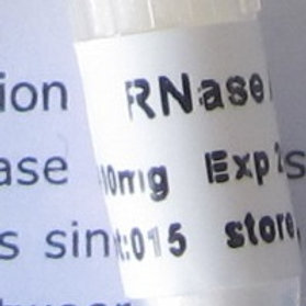 RNase A (Lyophilized Powder) - 100 mg