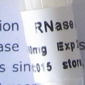 RNase A (Lyophilized Powder) - 100 mg