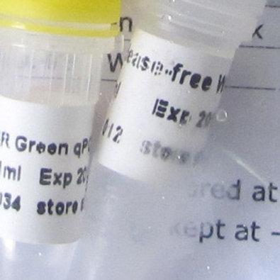 SYBR Green qPCR Mix