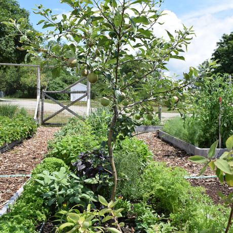 Fruits & Veggie Gardening