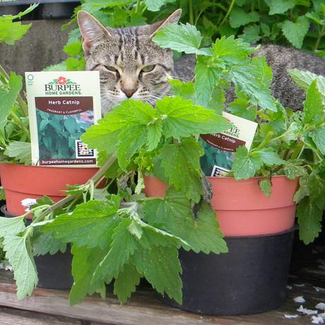 Annual Planting