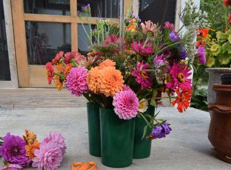Cut Flower Gardening