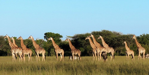 African Safari Planning Tips - Part One