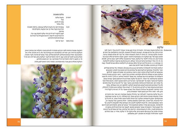 Book_PDF_4Pirsoom_R015.png