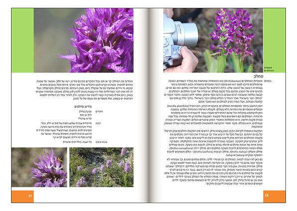 Book_PDF_4Pirsoom_R014.png