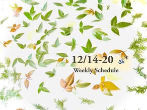週間スケジュール**12/14-12/20