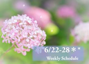 週間スケジュール**6/22-28
