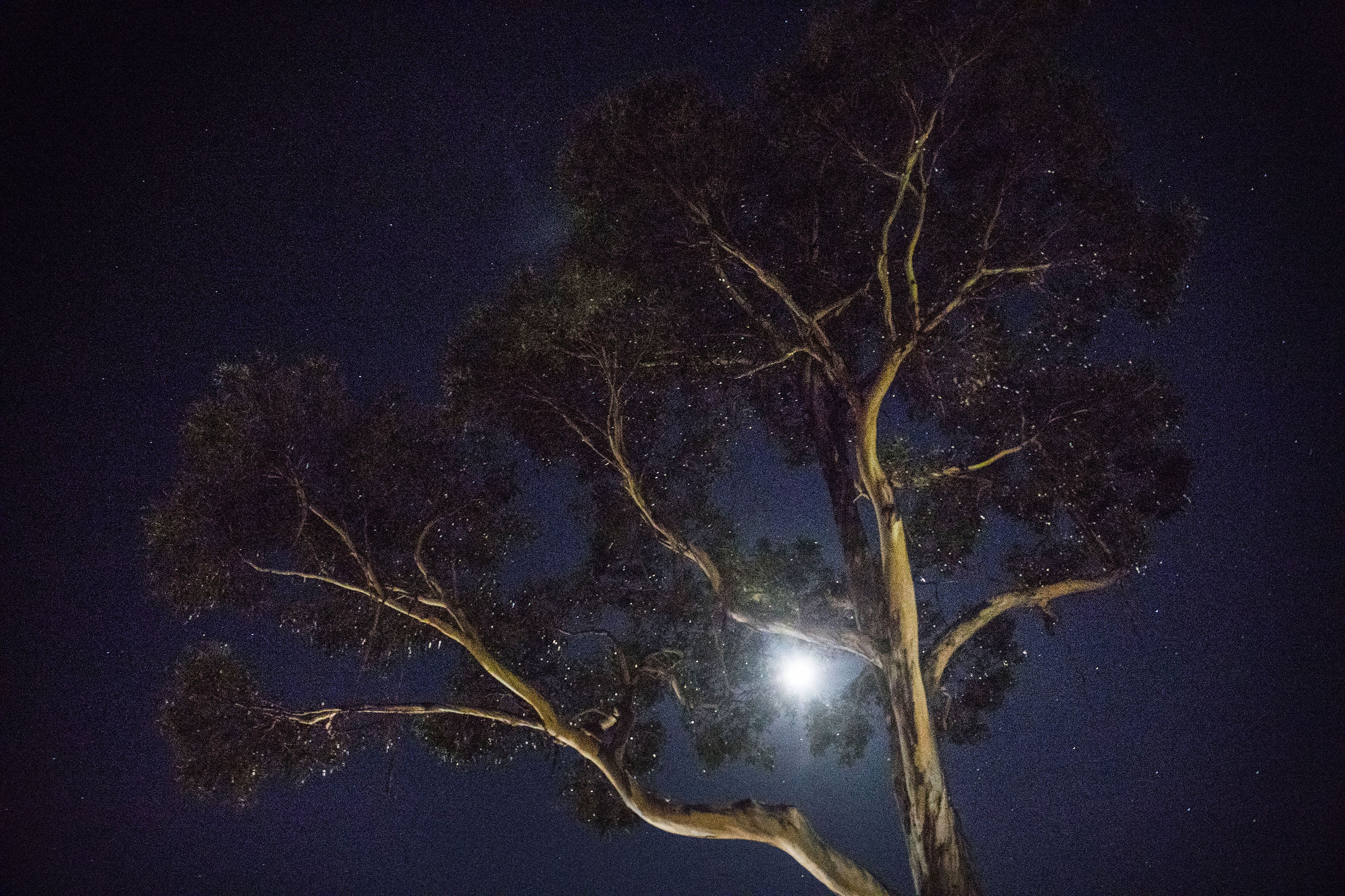 Night in Tasmania