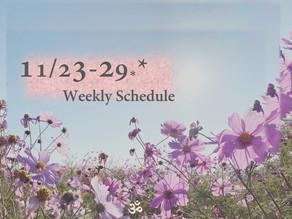 週間スケジュール**11/23-29