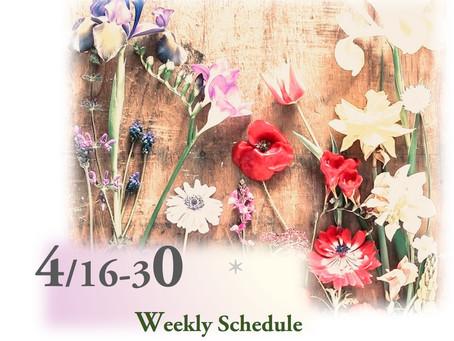 週間スケジュール**4/16-30
