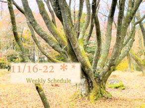 週間スケジュール**11/16-22