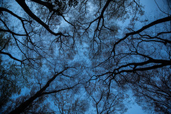Trees: Kyoto Daimonjiyama