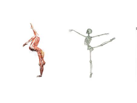Anatomy Training in Aerial Yoga Arts