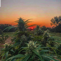 Research Grow in Tennessee