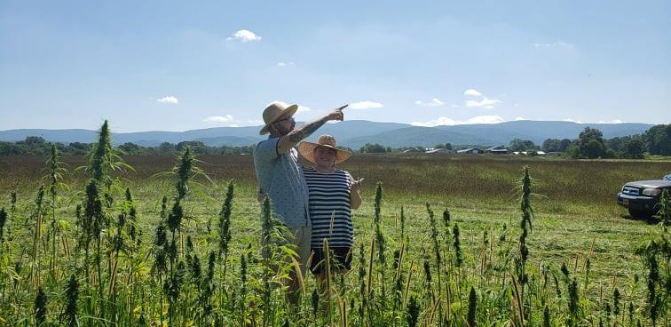Cannabis In Virginia