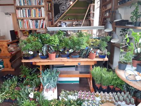 Plants have arrived!