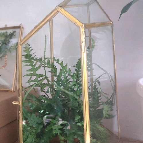 terrarium geometric planted
