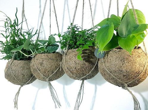 (L) Hanging coconut basket