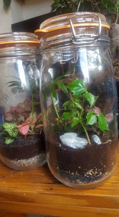 Terram Pacifici Uk Terrariums For Sale Workshops Events Botanical