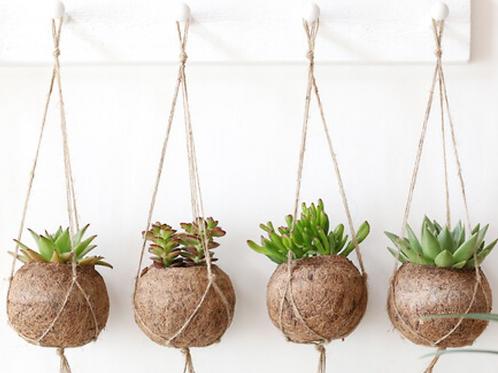 (S) Hanging coconut basket