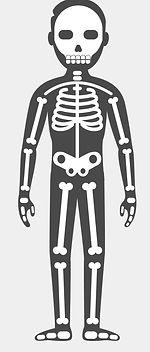 champ d'action de la Kinésithérapie et de l'ostéopathie : le squelette