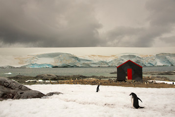 Black Red Shed with Penguins