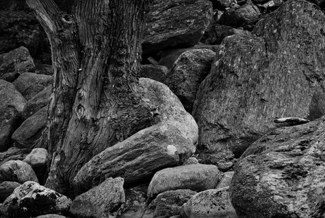 Wood Rock Formations