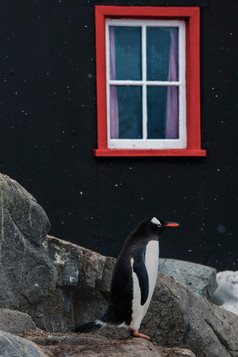 Penguin with Red Window