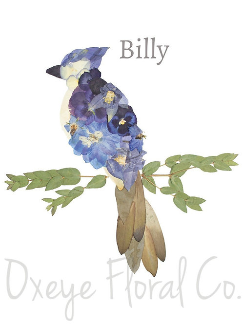 Billy the Blue Jay 8x10 print by Oxeye Floral Co.