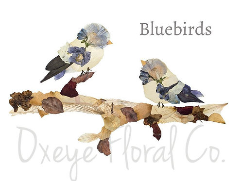 Bluebirds 8x10 Print by Oxeye Floral Co.