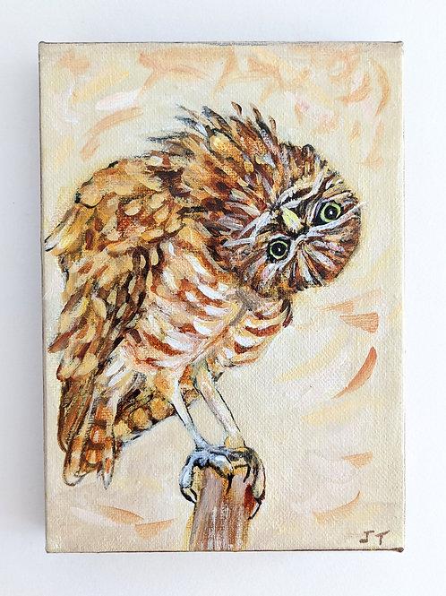 Burrowing Owl by Judy Trafford