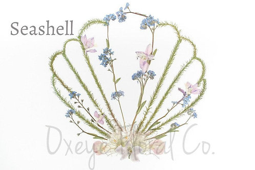 Seashell 8x10 print by Oxeye Floral Co.