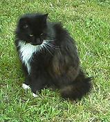 Cat for logo_edited.jpg