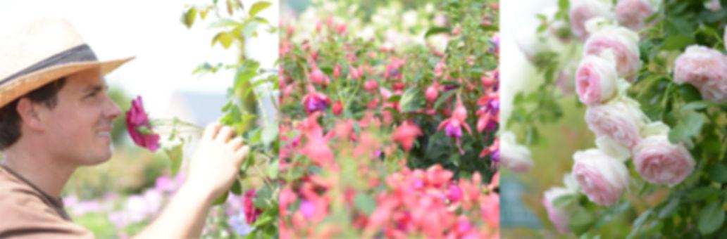 pépinière et jardinerie en brabant wallon