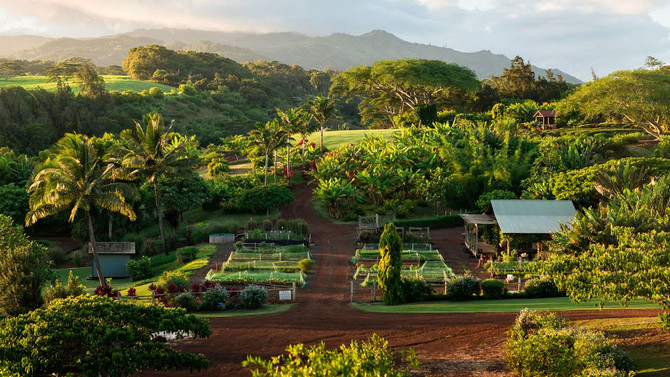 FARM-to-TABLE Living in Hawaii