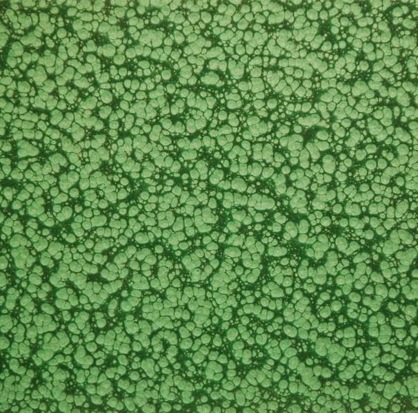 Зеленый молотковый